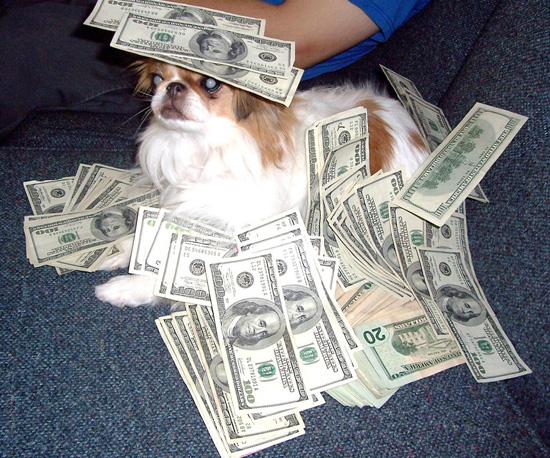 Dogs with money
